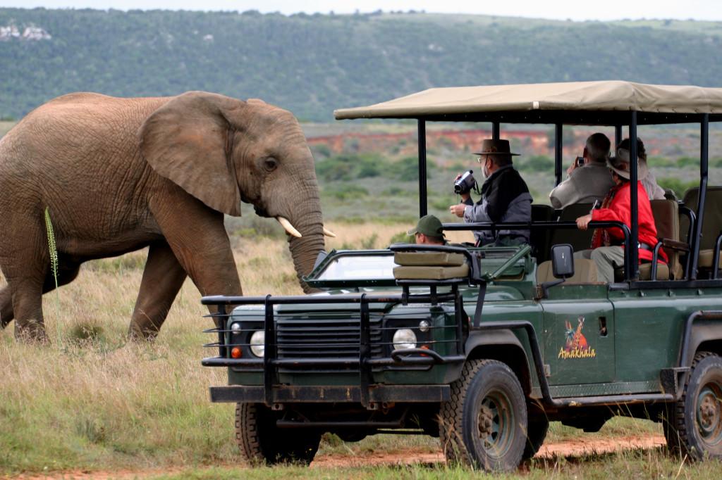 tourist visa safari